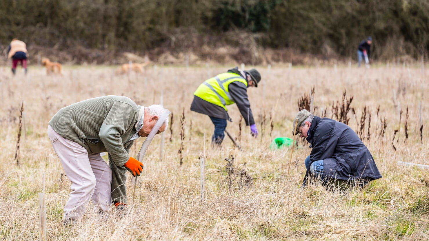 Woodland Trust currently plants over a million trees a year